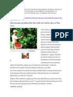 Disminuye Producción de Café en Norte de La Paz