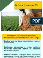 Cultivo de soja doenças 2