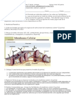 Guía+n+1+membrana+plasmática