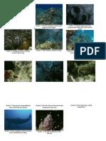 Gambar karang