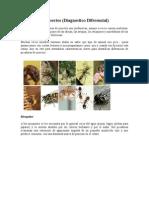 Picaduras de Insectos -Diagnostico Diferencial