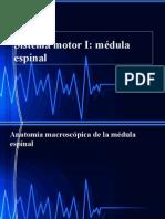 SLIDES -11-FALTA- ESPANHOL-SISTEMA MOTOR-CORTICAL-ANATOMIA-NEUROLOGIA-FISIOLOGIA DOS MOVIMENTOS-.ppsx