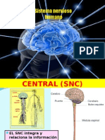Sistema Nervioso Humana