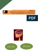 Fisiología Del Aparato Reproductor Masculino