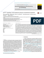 p27Kip1 Signaling- Transcriptional and Post-translational Regulation