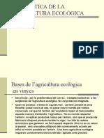 VINYA. CAS PRÀCTIC D'AGRICULTURA ECOLÒGICA
