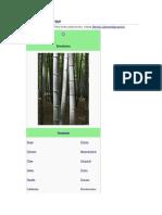 Bambusoideae