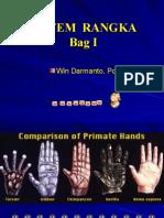 Anatomi Rangka IV