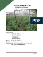Trabajo Practico de Horticultura 2014