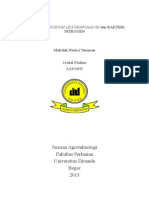 Bakteri Rhizobium Leguminosarum Dan Bakteri Nitrogen