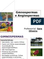 Gmnospermas e Angiospermas.pptx
