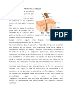 Composición Química Del Cabello