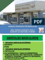 5 Aparato reproductor masculino.pdf