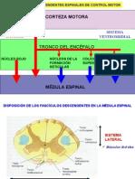 Control nervioso sistema motor.ppt