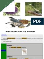Caracteristicas Animales