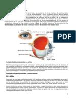 fisiologia de la vision.pdf