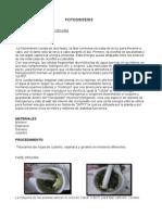 Fotosintesis Pract