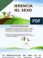 GENTICA DEL SEXO.pptx