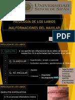 9. Patologia Labios, Malformac. Maxilar