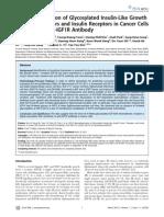 Heterodimerization of Glycosylated Insulin-Like Growth