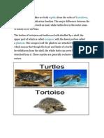Tortoises - SSC GRADE 2