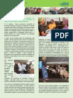 Futuras Promotoras Comunitárias de Veterinária são submetidas à pressão característica no tratamento de búfalos no Núcleo Zootécnico de Mozimuchopes