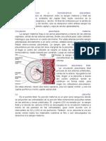 Material Del Seminaeio Placenta