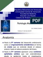 Patoligía Mamaria_2011