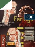 anatomiafaringe-120907115648-phpapp01