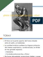 Clase 1 Torax