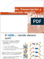 replicacintranscripcinytraduccindeladn-100609192348-phpapp01.pptx