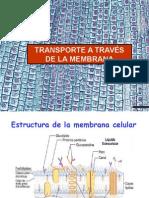 transporte-membrana-celular2159