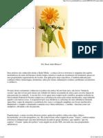 Arnica - Jardim de Flores_1