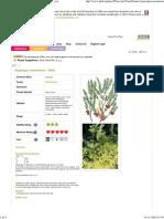 Asparagus Racemosus Shatavari PFAF Plant Database MED 5