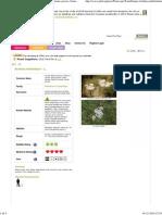 Achillea Millefolium Yarrow, Boreal Yarrow, California Yarrow, Giant Yarrow, Coast Yarrow, Western Yarrow, Pacific Yarrow PFAF Plant Database MED 4