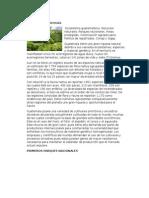 Ecología en Guatemala