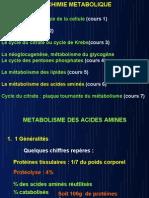 métabolisme des acide aminés