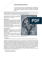 Neuroanatomia Basica