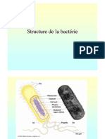 Structure Bacterie