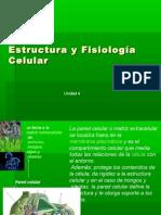 4.- Estructura y fisiología celular