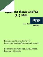 1 Opuntia Ficus Indica