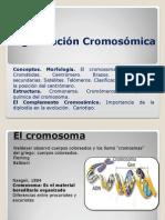 864215809.ORGANIZACION CROMOSOMICA