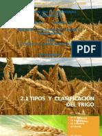 2.1 Tipos y Clasificación Del Trigo