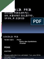 K22 - PA-genital-pria-edit.pptx
