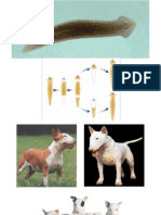 Reproducción en Animales y Plantas