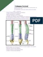 Columna Cervical 1.doc