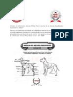 Estándar de Conformación American Pit Bull Terrier - ADBA PERU.pdf