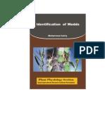 Weeds Identification