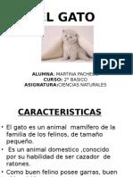 DISERTACION LOCA DE PATIO.pptx