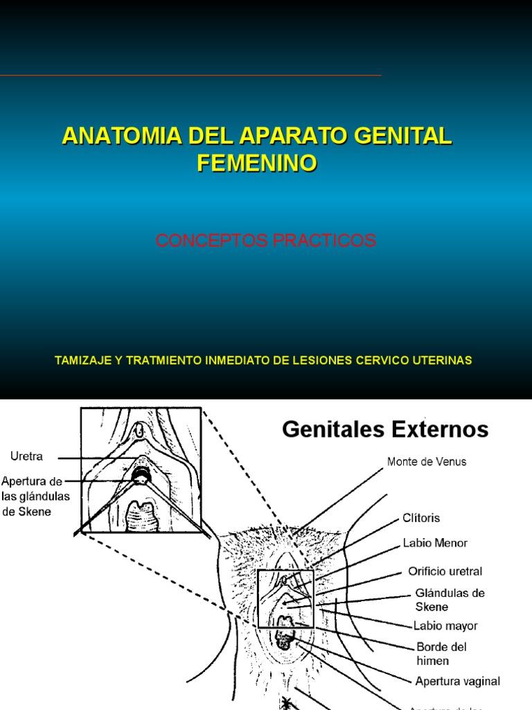Clase 01 - Anatomia Del Aparato Genital Femenino